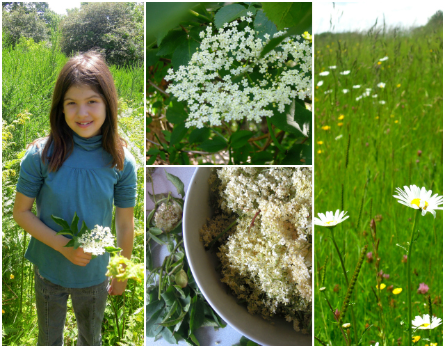 Elderflower Collage